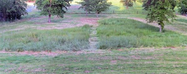 Yard_Panorama2a