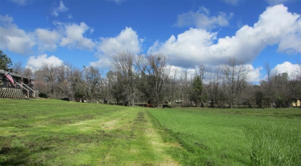 panoramagrass-cut